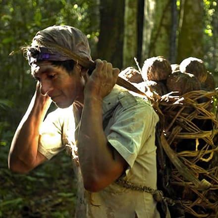 럭셔리 시계 브랜드 피아제가 산림보호에 앞장섭니다.